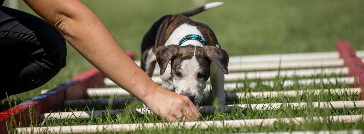 dog trainer Antigua