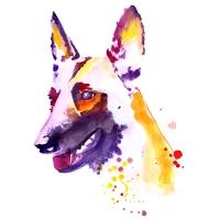 chrissisdogtraining.com