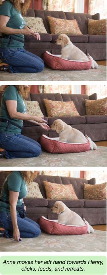 dog training, protocol for proximity, fearful dogs, puppy training, counterconditioning, treat and retreat