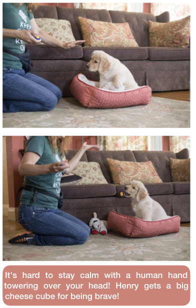 dog training, puppy training, fearful dogs, counterconditioning, desensitization